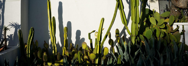 Insert cactus