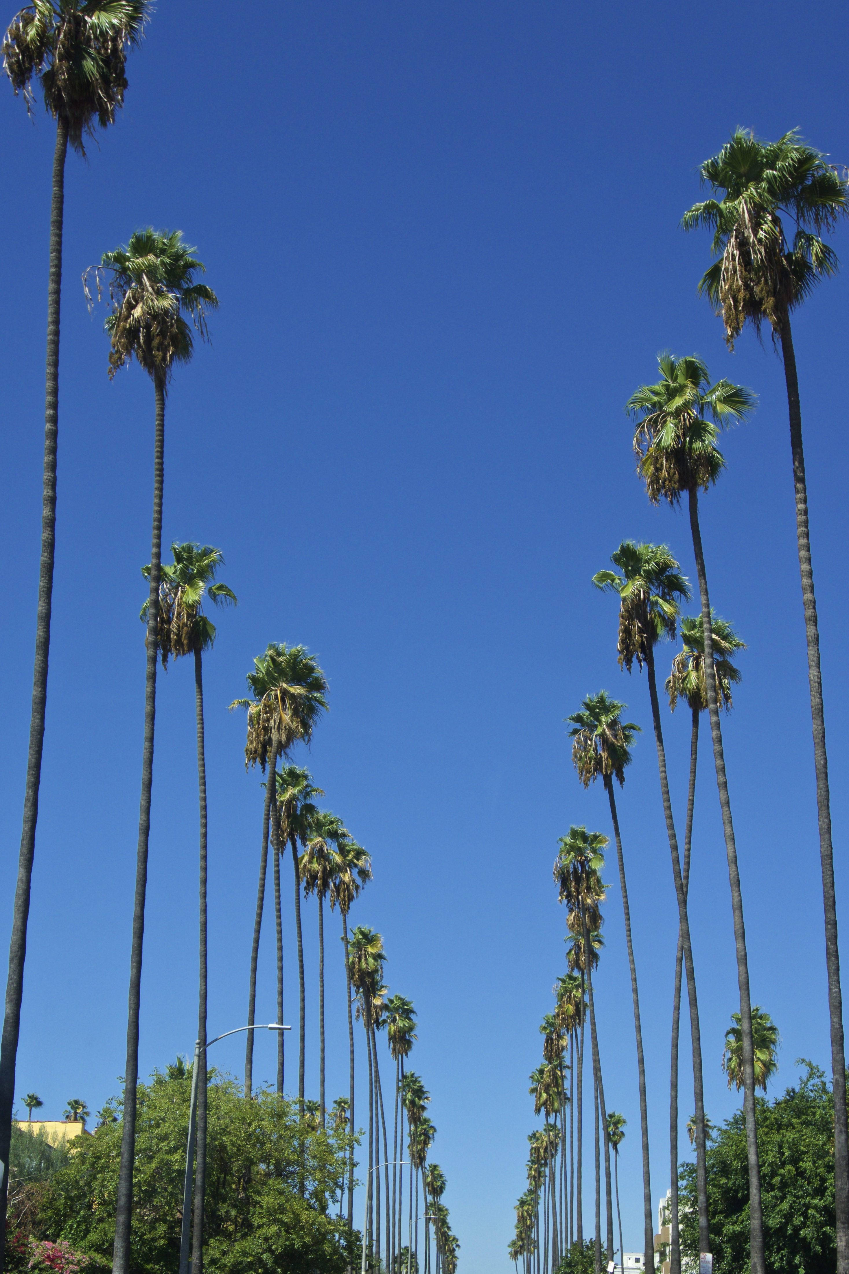 palm trees